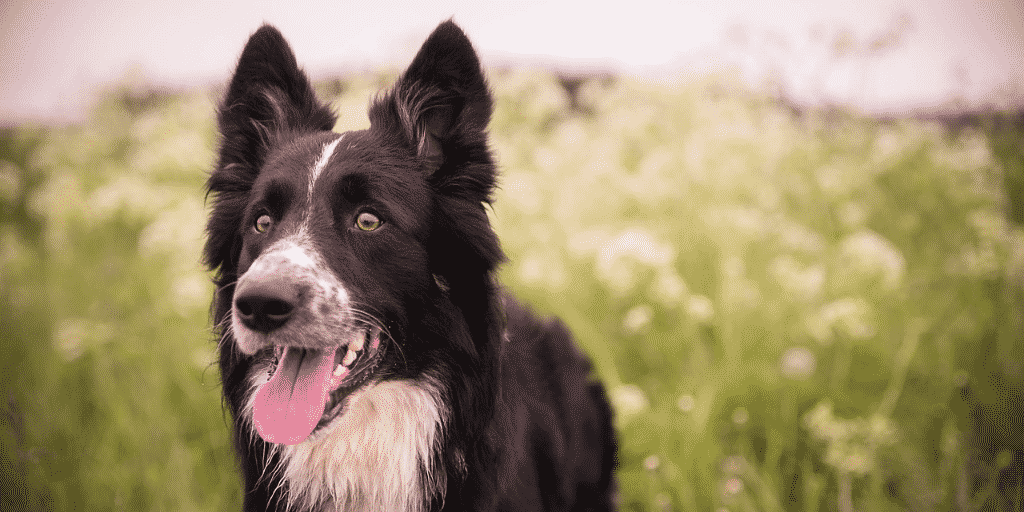 Kennel Has Statutory Lien Over Dog